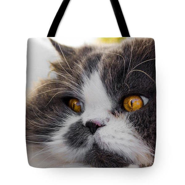 The Watching Cat Tote Bag by Daniel Precht