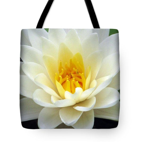 Tote Bag featuring the photograph The Water Lilies Collection - 03 by Pamela Critchlow