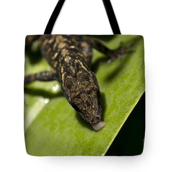 Tote Bag featuring the photograph Thirsty Brown Anole by Meg Rousher
