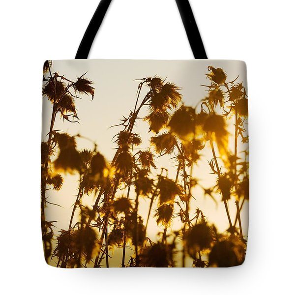 Tote Bag featuring the photograph Thistles In The Sunset by Chevy Fleet