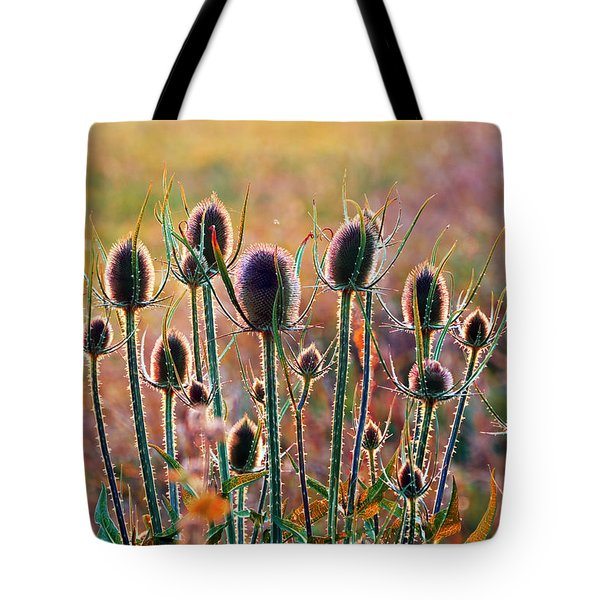 Thistles With Sunset Light Tote Bag