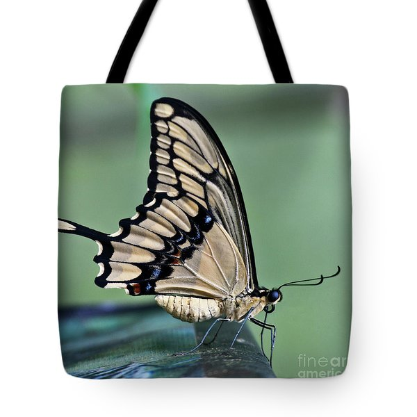 Thoas Swallowtail Butterfly Tote Bag by Heiko Koehrer-Wagner