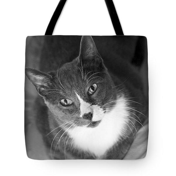 Devotion - Cat Eyes Tote Bag