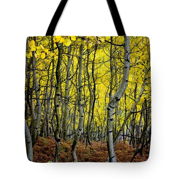 Tote Bag featuring the photograph Through The Aspen Forest by Ellen Heaverlo