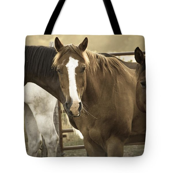 Tote Bag featuring the photograph Three Amigos by Steven Bateson