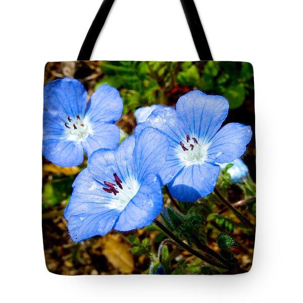 Three Baby Blue Eyes In Park Sierra-ca Tote Bag by Ruth Hager
