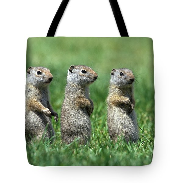 Three Baby Uinta Ground Squirrles Tote Bag