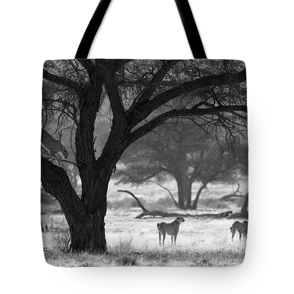 Three Cheetahs Tote Bag by Max Waugh