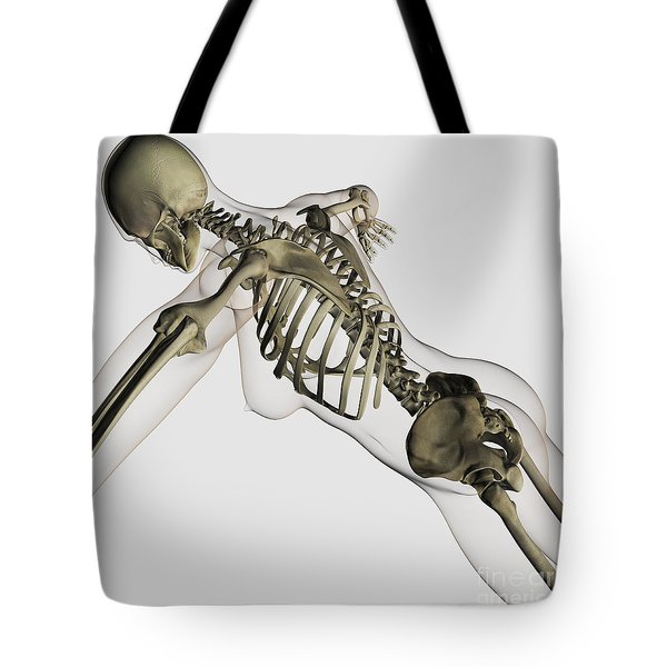 Three Dimensional View Of Female Spine Tote Bag by Stocktrek Images