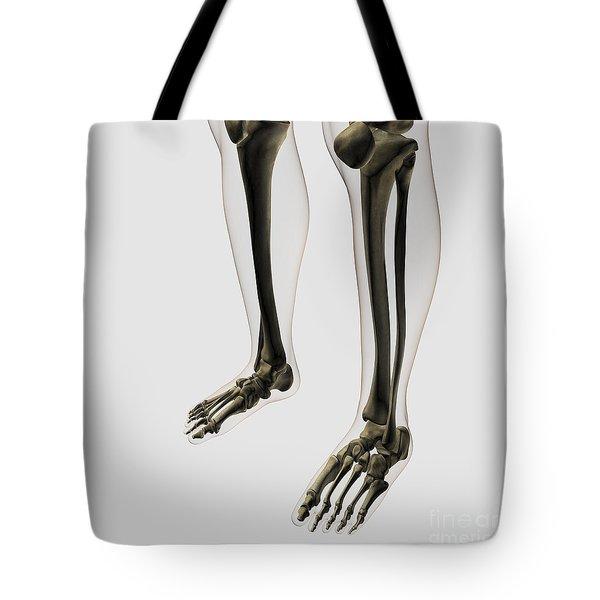 Three Dimensional View Of Human Leg Tote Bag by Stocktrek Images