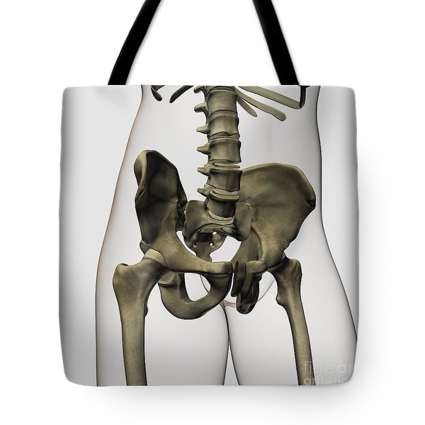 Three Dimensional View Of Human Pelvic Tote Bag by Stocktrek Images