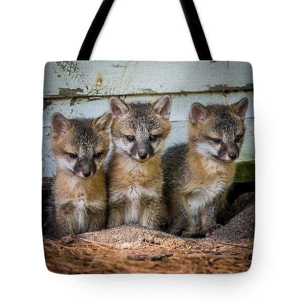 Three Fox Kits Tote Bag by Paul Freidlund