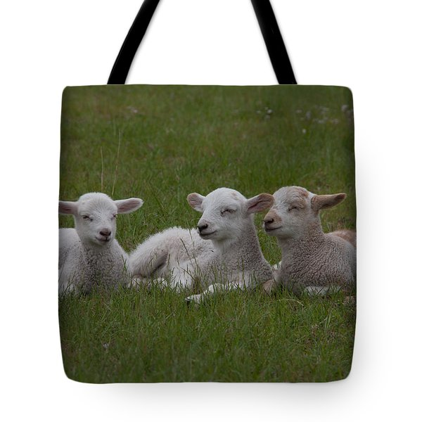 Three Lambs Tote Bag by Richard Baker