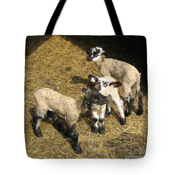 Three Little Lambs In Spring Sunshine Tote Bag