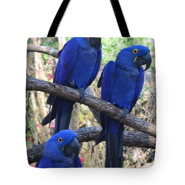 Three Pals Tote Bag by Kathleen Struckle