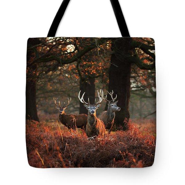 Three Red Deer, Cervus Elaphus Tote Bag