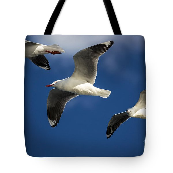 Three Silver Gulls In Flight Tote Bag by Avalon Fine Art Photography