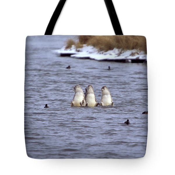 Three Swans With Their Heads Underwater Tote Bag