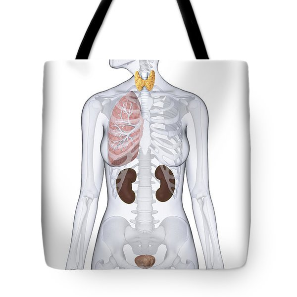 Thyroid, Lung, Kidneys, And Bladder Tote Bag