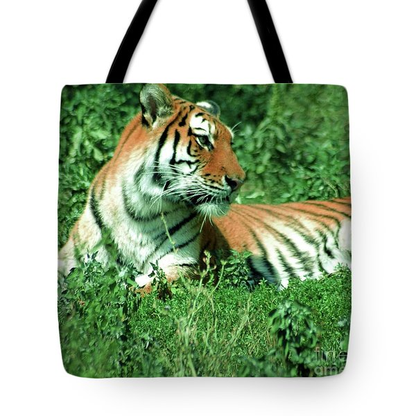Tiger Tote Bag by Kathleen Struckle