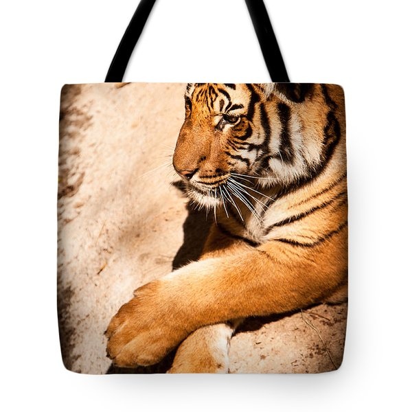 Tiger Resting Tote Bag