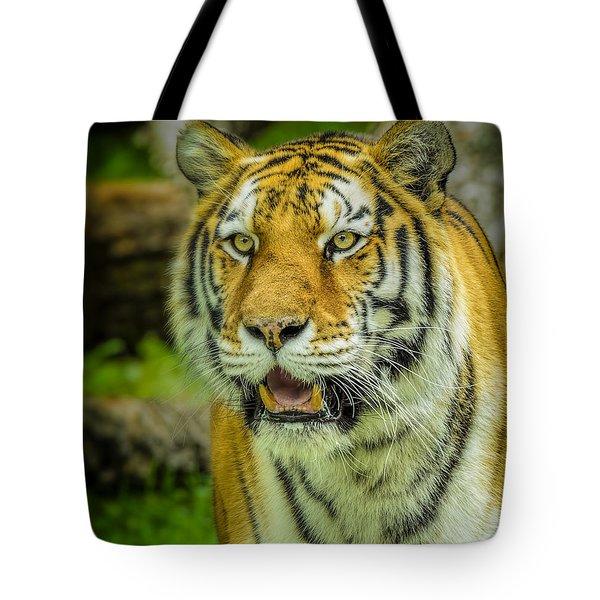 Tiger Stare Tote Bag by LeeAnn McLaneGoetz McLaneGoetzStudioLLCcom
