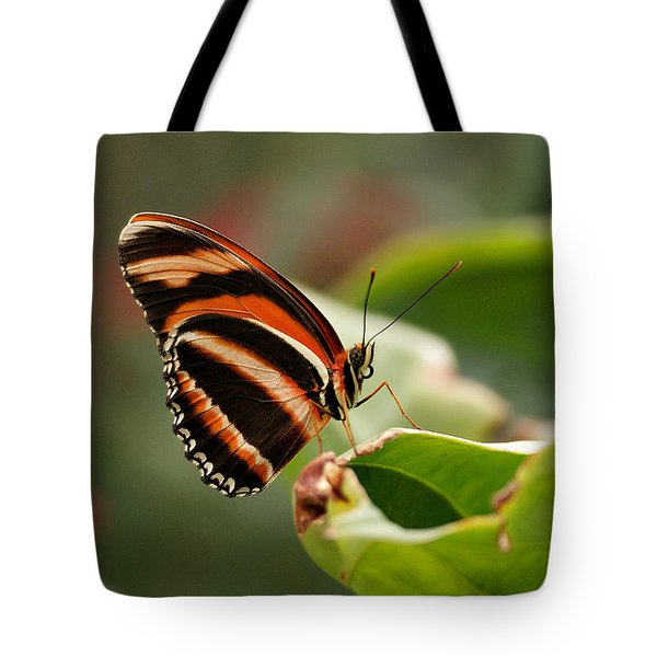 Tiger Striped Butterfly Tote Bag