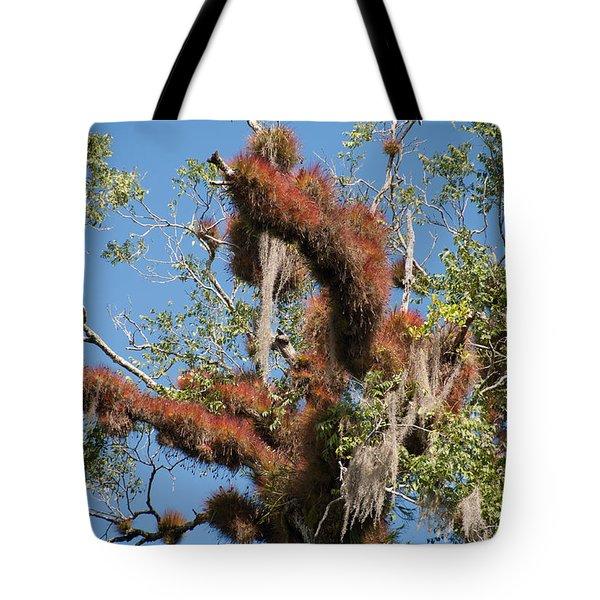 Tikal Furry Tree Closeup Tote Bag