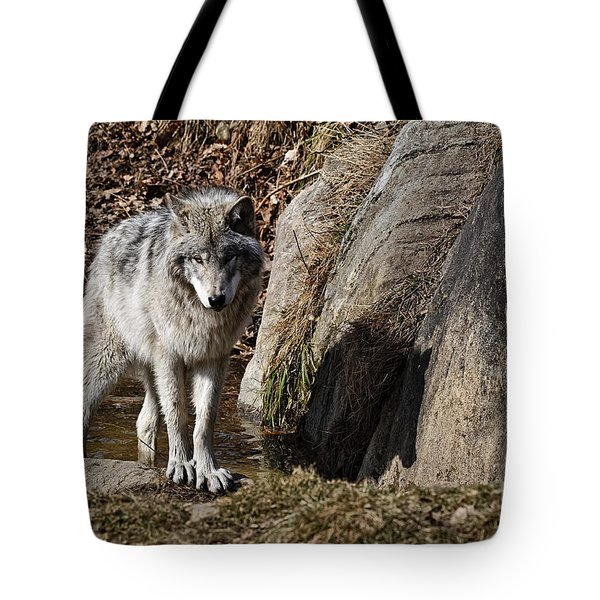 Tote Bag featuring the photograph Timber Wolf In Pond by Wolves Only