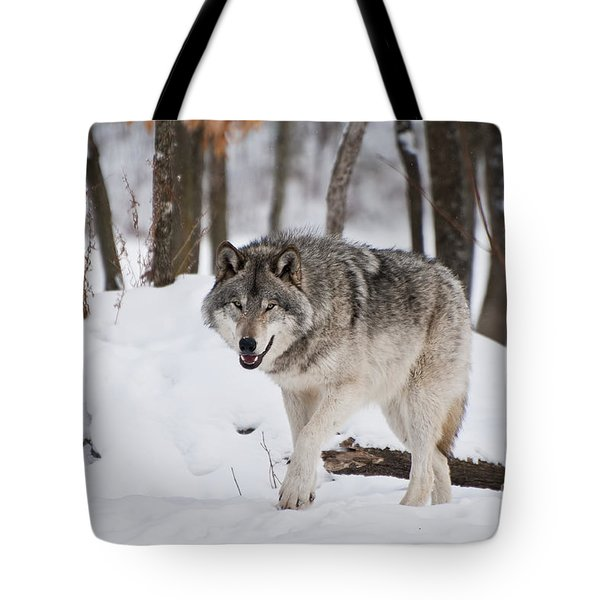 Tote Bag featuring the photograph Timber Wolf In Winter Forest by Wolves Only