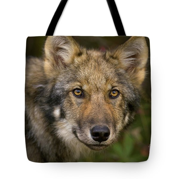 Timber Wolf In Denali Tote Bag