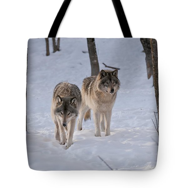 Tote Bag featuring the photograph Timber Wolf Pair  by Wolves Only