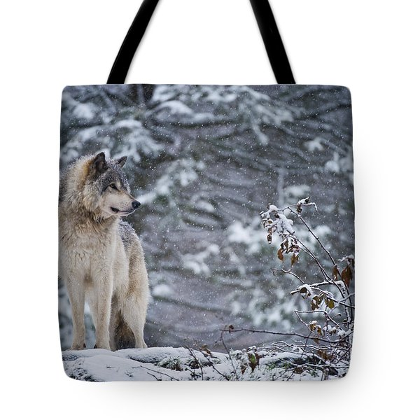 Timber Wolf Pictures 189 Tote Bag