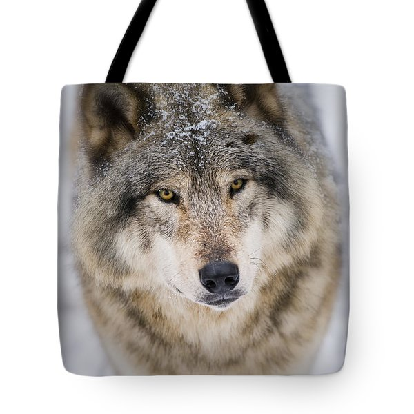 Timber Wolf Pictures 254 Tote Bag
