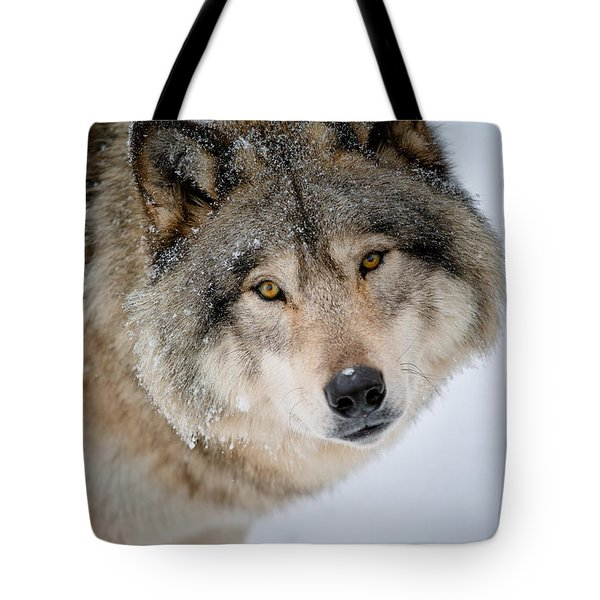 Timber Wolf Pictures 255 Tote Bag