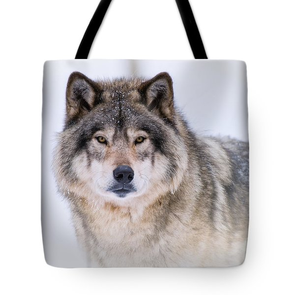 Timber Wolf Pictures 256 Tote Bag