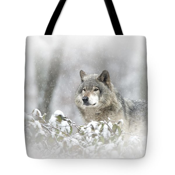Timber Wolf Pictures 279 Tote Bag