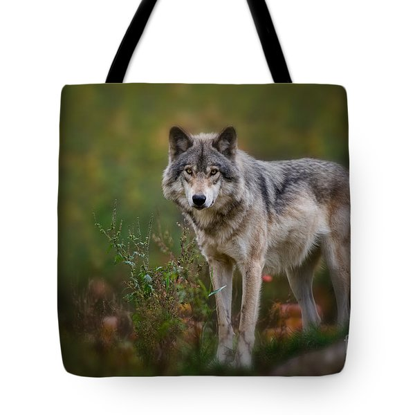 Timber Wolf Pictures 401 Tote Bag