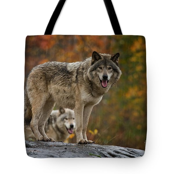 Timber Wolf Pictures 410 Tote Bag