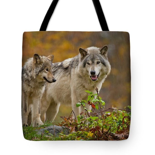 Timber Wolf Pictures 411 Tote Bag