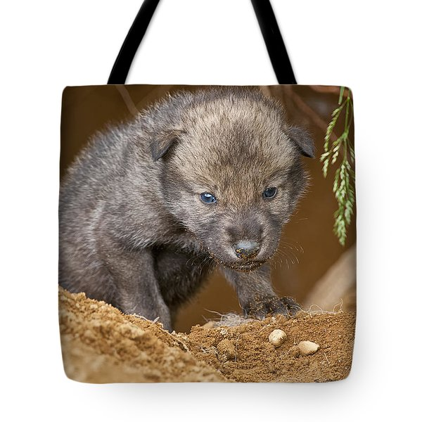 Timber Wolf Pictures 782 Tote Bag by World Wildlife Photography