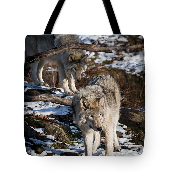 Timber Wolf Pictures 957 Tote Bag by World Wildlife Photography