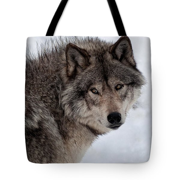 Tote Bag featuring the photograph Timberwolf At Rest by Bianca Nadeau