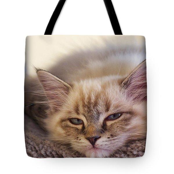 Tired Kitten Tote Bag