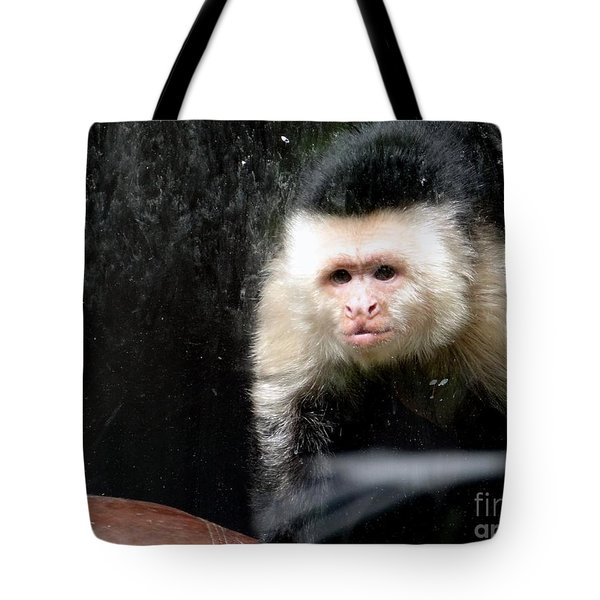 Tito In Window Tote Bag by Ed Weidman