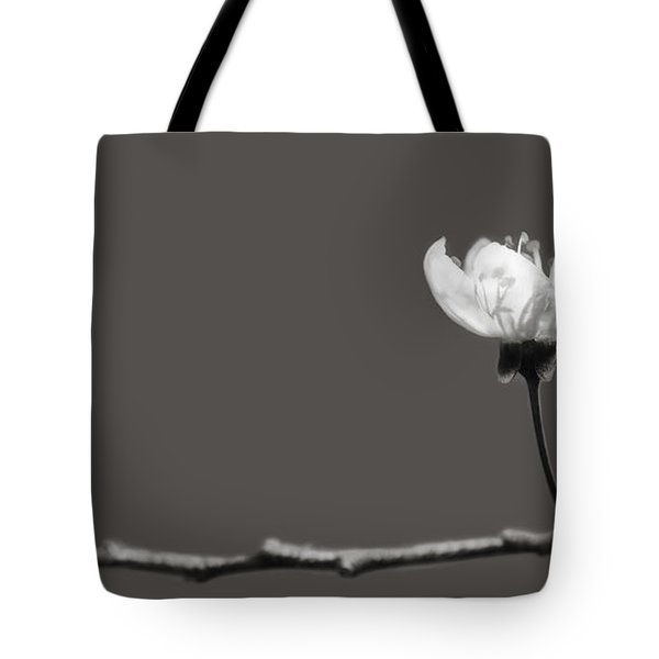 to Kiss the Sun Tote Bag by Lisa Knechtel