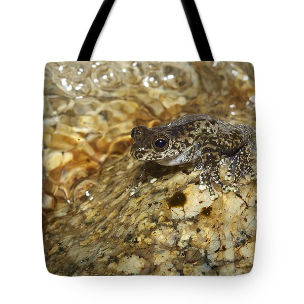 Torrent Treefrog Aka Waterfall Frog Tote Bag