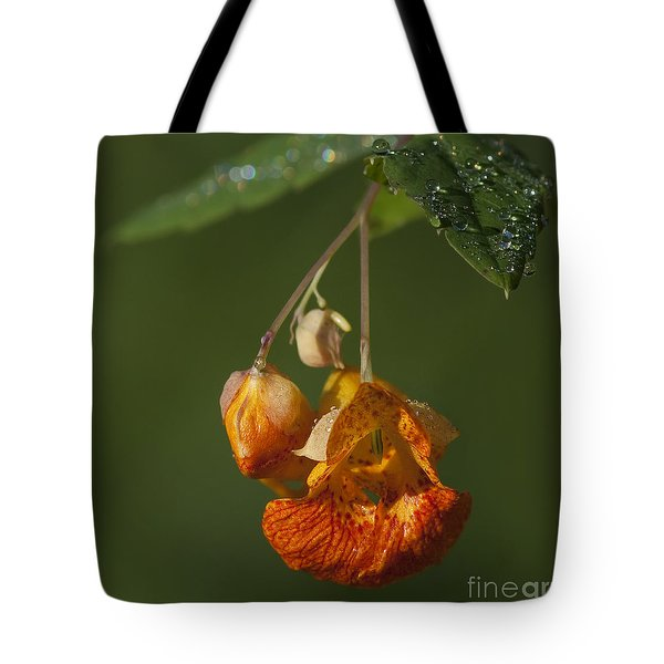 Touch Me Not.. Tote Bag