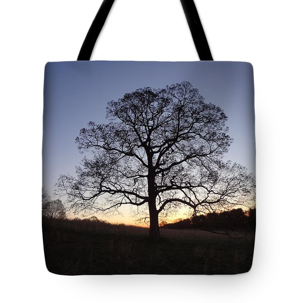 Tree At Dawn Tote Bag by Michael Porchik