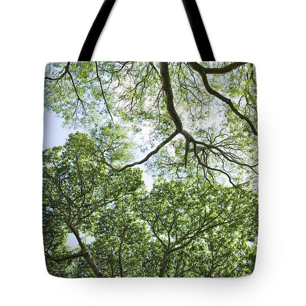 Tree Canopies Tote Bag